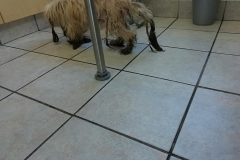 Dogs rescued by the MMID