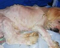 Rescued dog-MMID